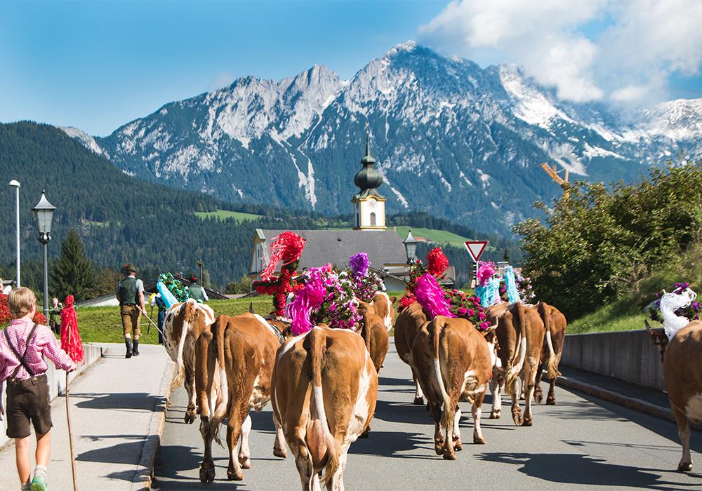 Unvergesslicher Almabtrieb in Tirol - Senner meets Blogger