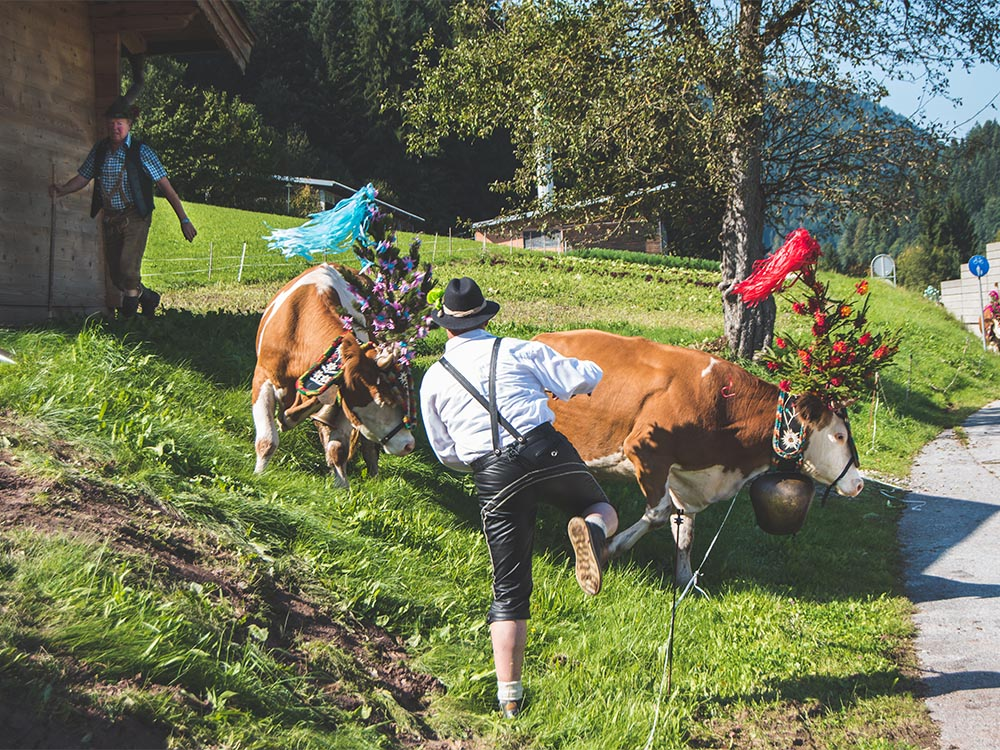 Unvergesslicher Aplmabtrieb in Tirol - Senner meets Blogger