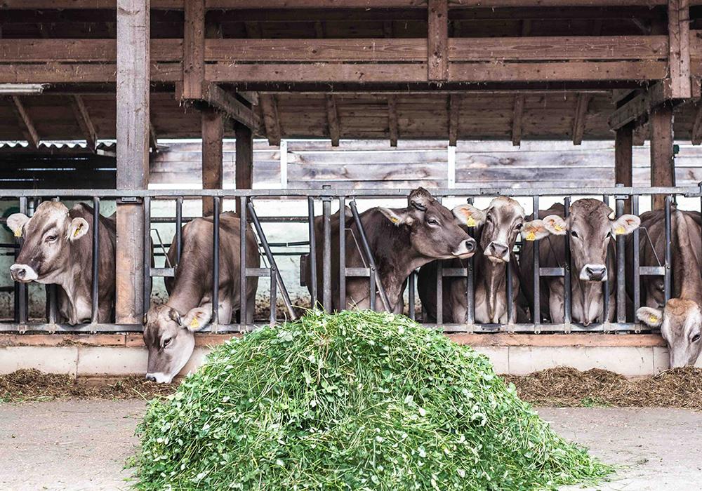 Vom Hof zur Molkerei - bei den Naturland Milchprodukten für REWE Bio