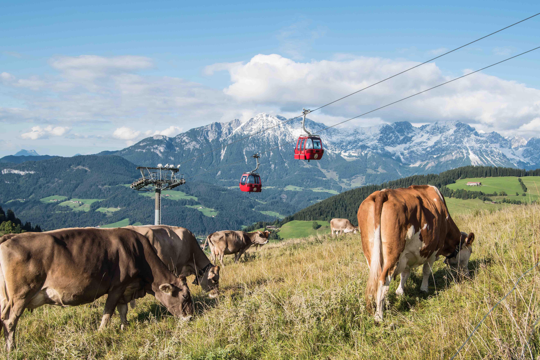 Hochsöll Tiroler Bergkäse