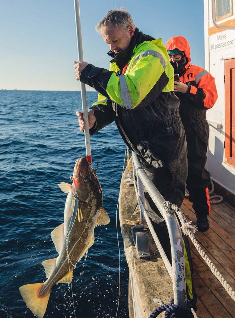 Skrei fischen in Lofoten