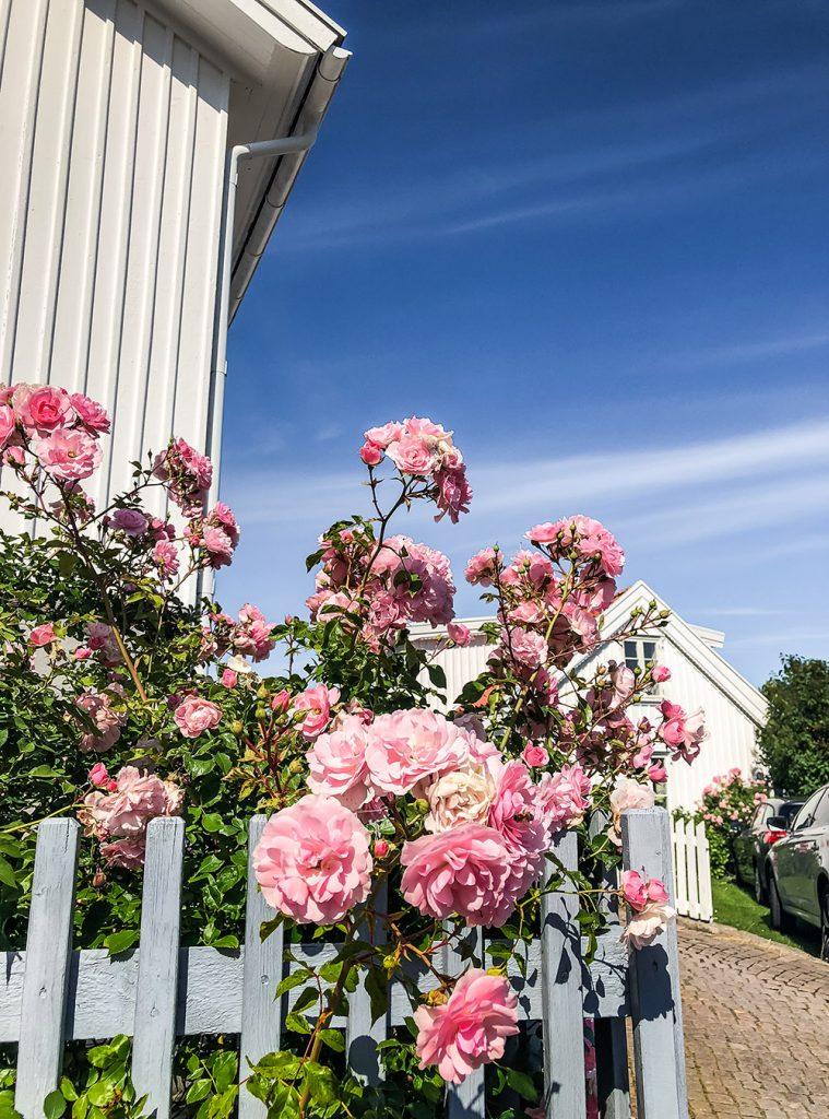 Midsommar an der schönen Westküste in Schweden