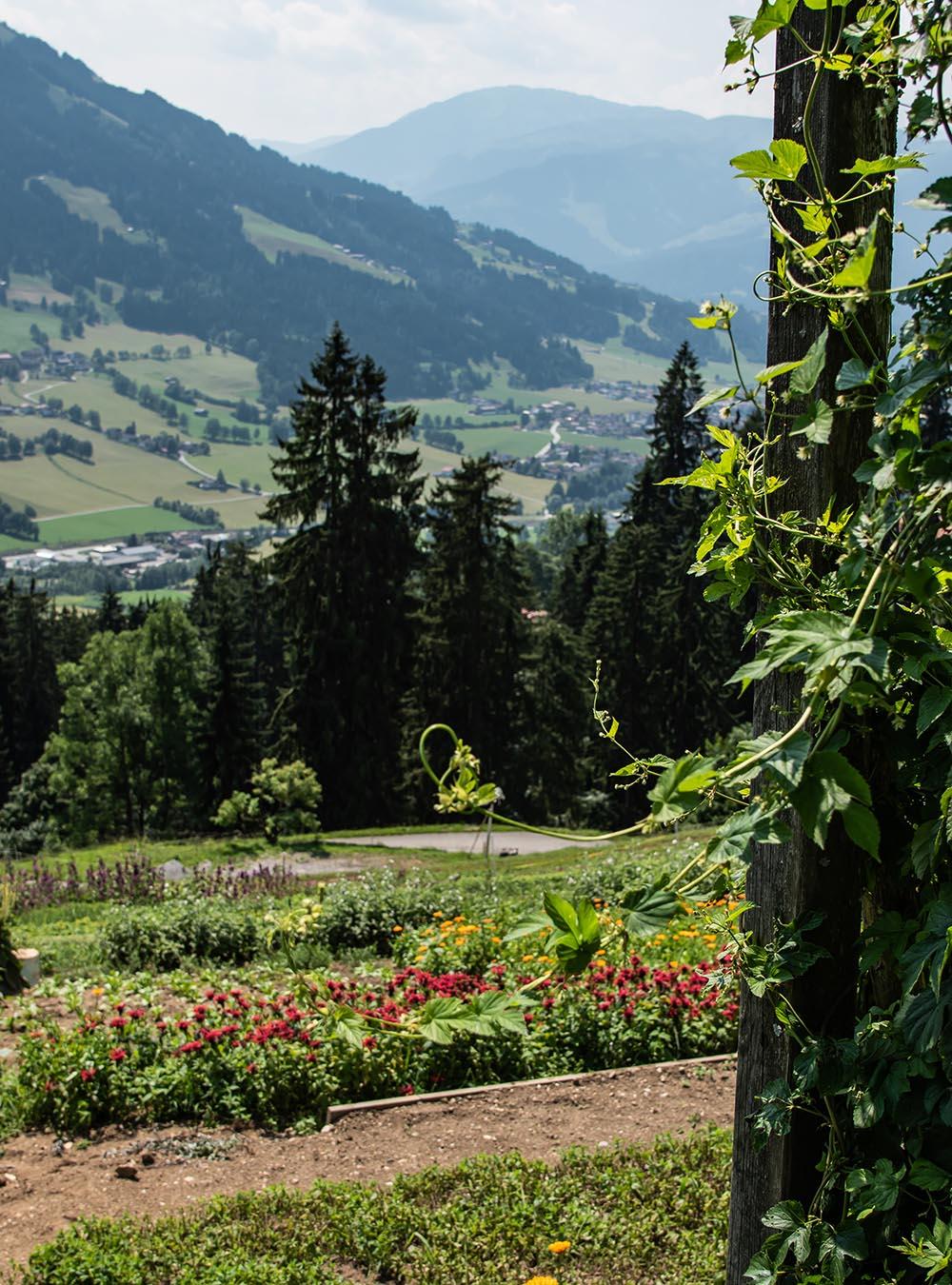 Biobauernhof Obertreichl