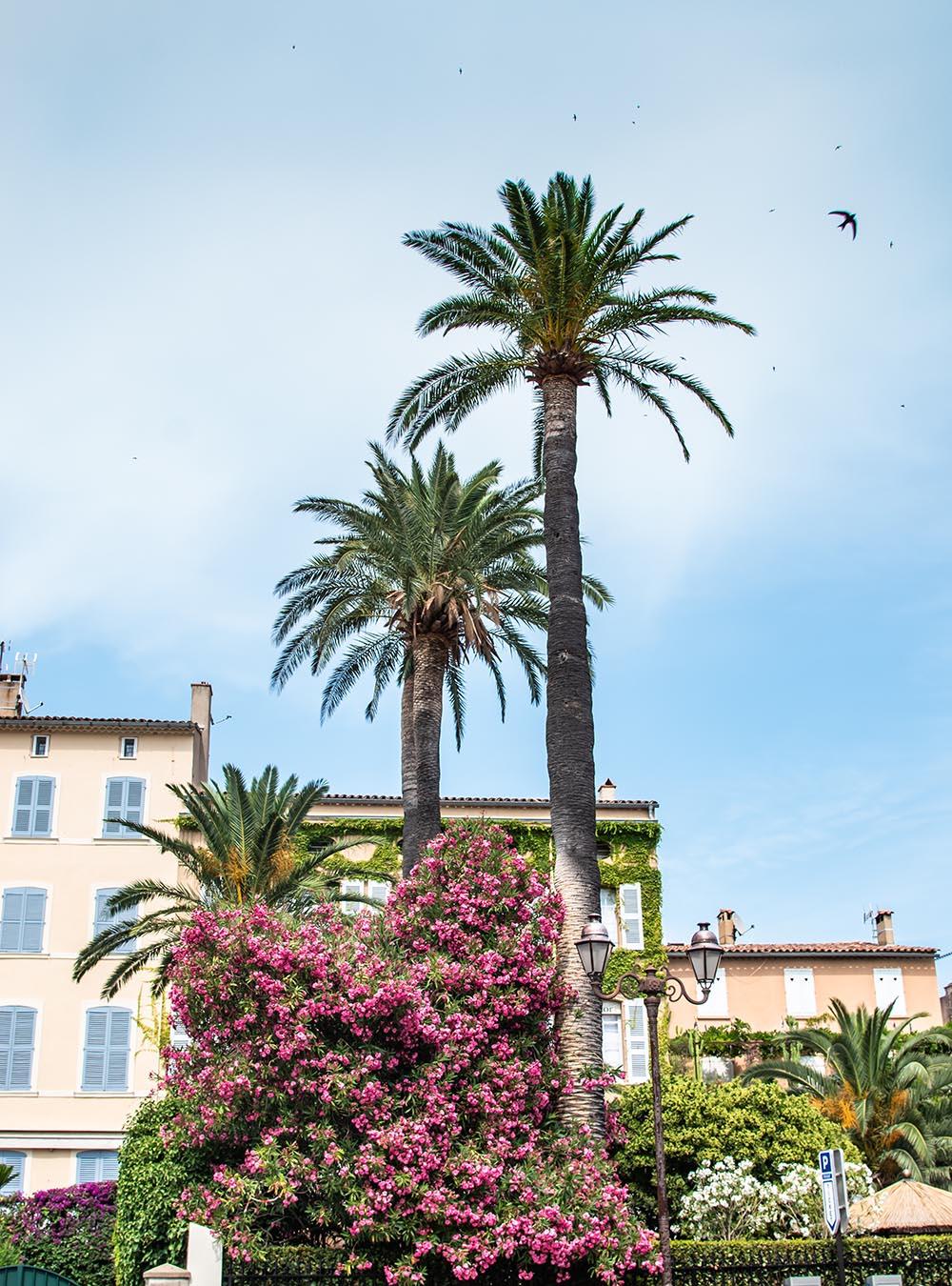 Sommer an der Côte d'Azur Saint-Tropez